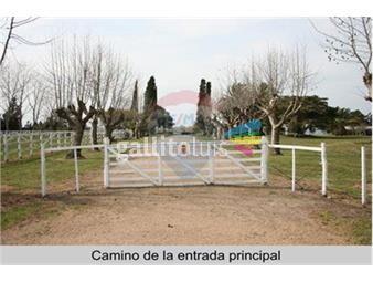 https://www.gallito.com.uy/campo-agricola-ganadero-lechero-1434-has-inmuebles-18419895