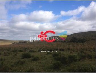 https://www.gallito.com.uy/campo-ganadero-forestal-en-cerro-largo-ref-2441-inmuebles-18499854