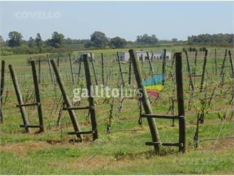https://www.gallito.com.uy/terrenos-zona-punta-gorda-viñas-seguridad-inmuebles-19279903