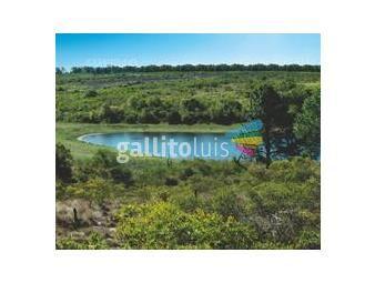 https://www.gallito.com.uy/terreno-barrio-privado-seguridad-puerto-helipuerto-inmuebles-19280014