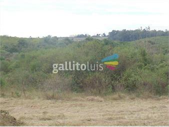 https://www.gallito.com.uy/terreno-nueva-palmira-inmuebles-19280137