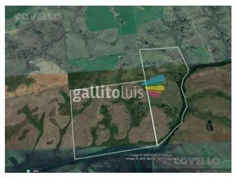 https://www.gallito.com.uy/campo-en-soriano-forestal-oportunidad-inmuebles-19282263