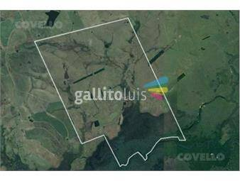 https://www.gallito.com.uy/campo-villa-ansina-agricultura-ganaderia-inmuebles-19282378