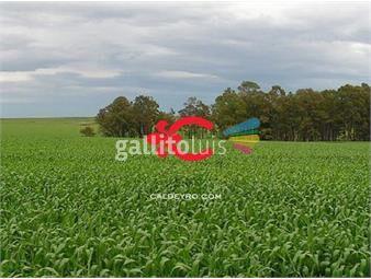 https://www.gallito.com.uy/campo-agricola-ganadero-en-young-ref-5319-inmuebles-18499966