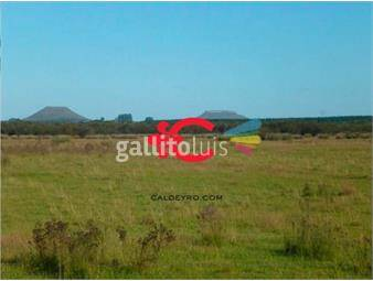 https://www.gallito.com.uy/campo-ganadero-en-venta-don-horacio-ref-6521-inmuebles-18499675