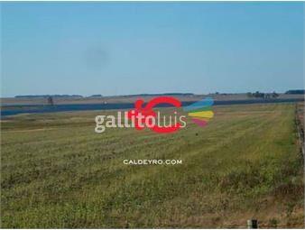 https://www.gallito.com.uy/campo-agricola-el-lago-ref-1343-inmuebles-18499861