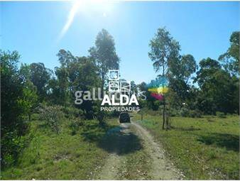 https://www.gallito.com.uy/terreno-en-punta-colorada-inmuebles-13955979