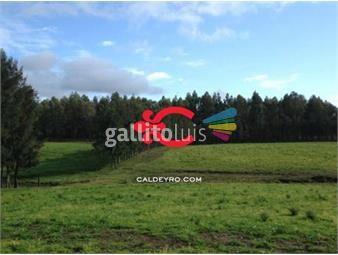 https://www.gallito.com.uy/campo-en-maldonado-ref-4536-inmuebles-18499814