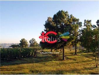 https://www.gallito.com.uy/terreno-en-venta-en-la-tahona-ref-6016-inmuebles-18488577
