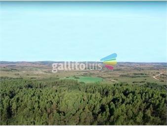 https://www.gallito.com.uy/campo-forestal-en-maldonado-ref-7279-inmuebles-18488605