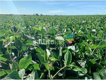 https://www.gallito.com.uy/campo-agricola-ganadero-en-durazno-ref-7484-inmuebles-18612374