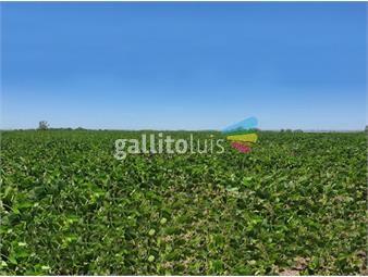 https://www.gallito.com.uy/campo-en-venta-en-flores-ref-7638-inmuebles-19192795