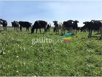 https://www.gallito.com.uy/campo-en-venta-en-florida-ref-5381-inmuebles-19206877