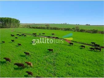 https://www.gallito.com.uy/campo-en-flores-ref-5029-inmuebles-19290225