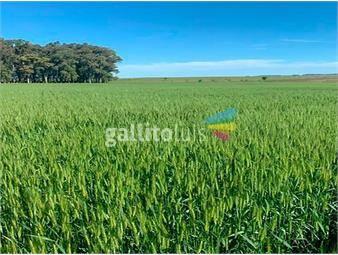 https://www.gallito.com.uy/campo-en-venta-en-rio-negro-ref-4562-inmuebles-19154465