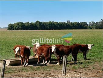 https://www.gallito.com.uy/campo-en-salto-ref-5118-inmuebles-19288882