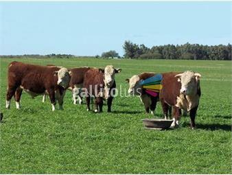 https://www.gallito.com.uy/campo-agricola-en-rio-negro-ref-2070-inmuebles-18499858