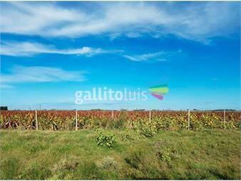 https://www.gallito.com.uy/campo-en-venta-en-florida-ref-2126-inmuebles-19346051