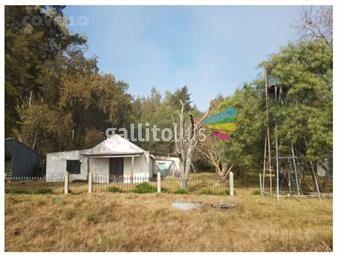 https://www.gallito.com.uy/campo-agricola-ganadero-y-parcela-con-forestacion-inmuebles-19396964