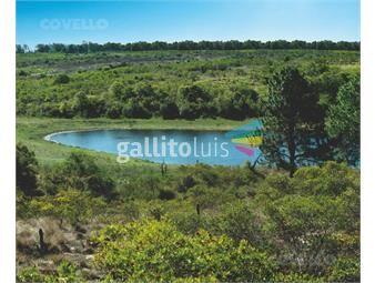 https://www.gallito.com.uy/terreno-en-barrio-privado-acceso-a-playa-puerto-segurida-inmuebles-19280049