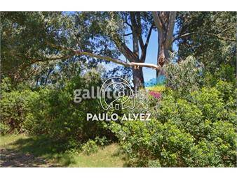 https://www.gallito.com.uy/terrenos-venta-punta-colorada-te703-inmuebles-19490366