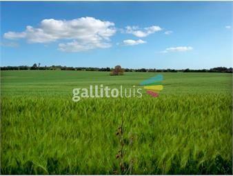 https://www.gallito.com.uy/campo-agricola-en-salto-ref-5731-inmuebles-19506704
