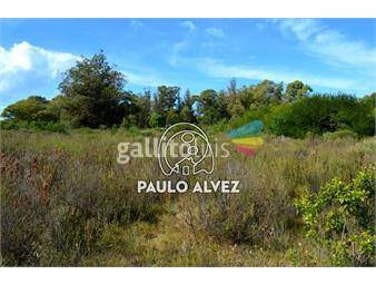 https://www.gallito.com.uy/terrenos-venta-punta-colorada-te644-inmuebles-19557576