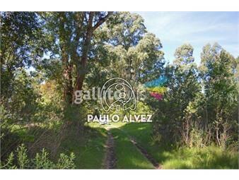 https://www.gallito.com.uy/terrenos-venta-punta-colorada-te705-inmuebles-19557754