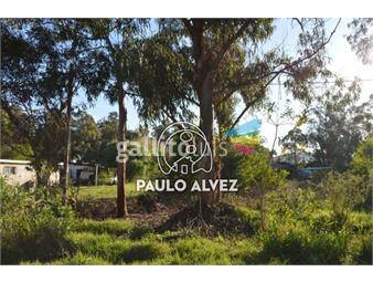 https://www.gallito.com.uy/terrenos-venta-punta-negra-te301-inmuebles-19558810