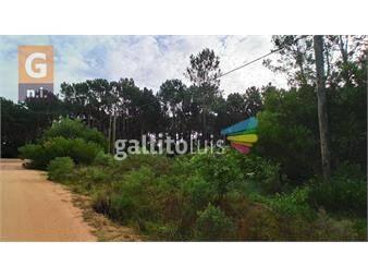 https://www.gallito.com.uy/terreno-en-maldonado-parque-burnet-inmuebles-19641158