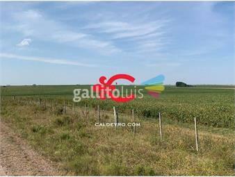 https://www.gallito.com.uy/campo-agricola-ganadero-en-paysandu-ref-7106-inmuebles-18499458