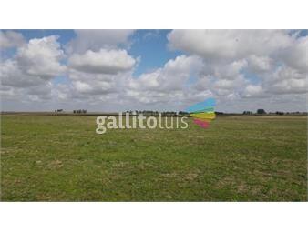 https://www.gallito.com.uy/campo-en-venta-en-lavalleja-ruta-8-agricola-ganadero-inmuebles-19707906