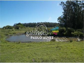 https://www.gallito.com.uy/chacras-venta-cerros-azules-ch064-inmuebles-19715602