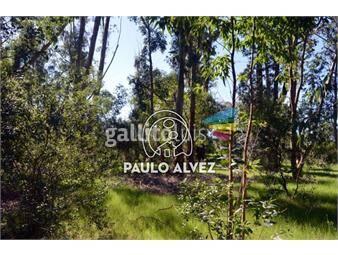 https://www.gallito.com.uy/terrenos-venta-punta-colorada-te431-inmuebles-19716054