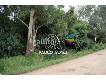 https://www.gallito.com.uy/terrenos-venta-playa-hermosa-te1140-inmuebles-19716231