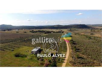 https://www.gallito.com.uy/chacras-venta-cerros-azules-ch084-inmuebles-19716338