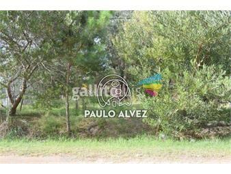 https://www.gallito.com.uy/terrenos-venta-playa-verde-te1217-inmuebles-19716499
