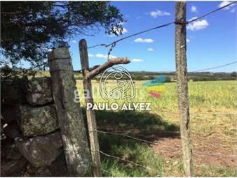 https://www.gallito.com.uy/chacras-venta-pan-de-azucar-ch135-inmuebles-19716844