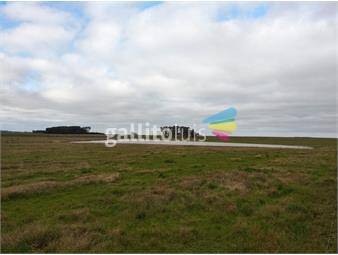 https://www.gallito.com.uy/campo-298-has-en-rocha-espectacular-ganadero-agricultura-inmuebles-19804950