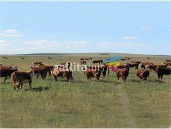 https://www.gallito.com.uy/campo-ganadero-turistico-la-paloma-ref-3679-inmuebles-18499708