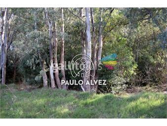 https://www.gallito.com.uy/terrenos-venta-bella-vista-te1237-inmuebles-19939986