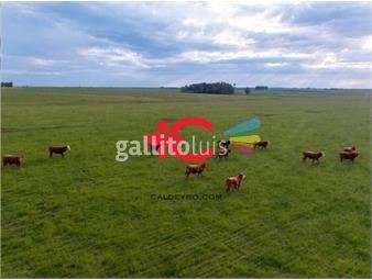 https://www.gallito.com.uy/campo-ganadero-en-cerro-largo-ref-5359-inmuebles-19978549