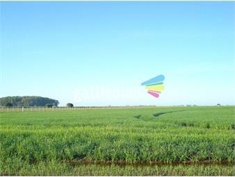 https://www.gallito.com.uy/venta-campo-agricola-ganadero-treinta-y-tres-inmuebles-20002031