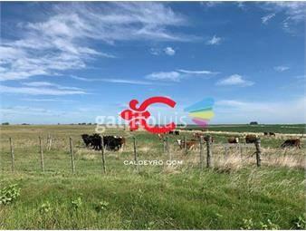 https://www.gallito.com.uy/campo-ganadero-agricola-en-paysandu-ref-2562-inmuebles-18488581