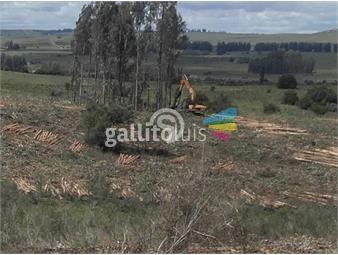 https://www.gallito.com.uy/campo-en-venta-inmuebles-20010911