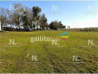 https://www.gallito.com.uy/exelente-campo-ganadero-inmuebles-20046068