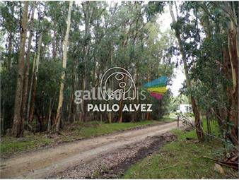 https://www.gallito.com.uy/terrenos-venta-bella-vista-te1008-inmuebles-20052065