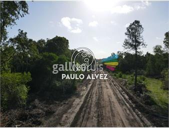 https://www.gallito.com.uy/terrenos-venta-playa-verde-te1268-inmuebles-20053250