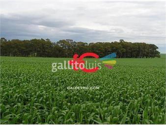 https://www.gallito.com.uy/estancia-ganadero-agricola-ref-1454-inmuebles-18499705