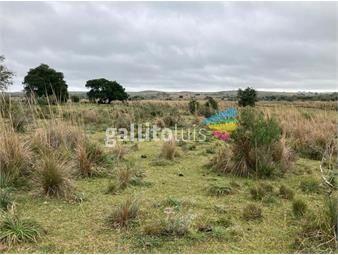 https://www.gallito.com.uy/venta-campo-treinta-y-tres-inmuebles-20101279